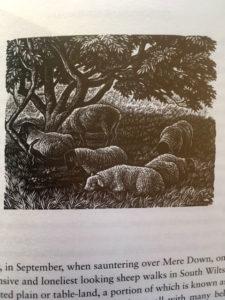 shepherd's life detail - www.booksonthelane.co.uk