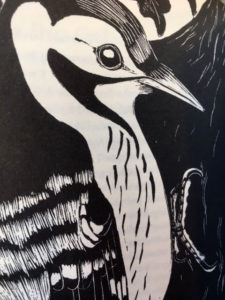 Birds an anthology woodpecker - www.booksonthelane.co.uk